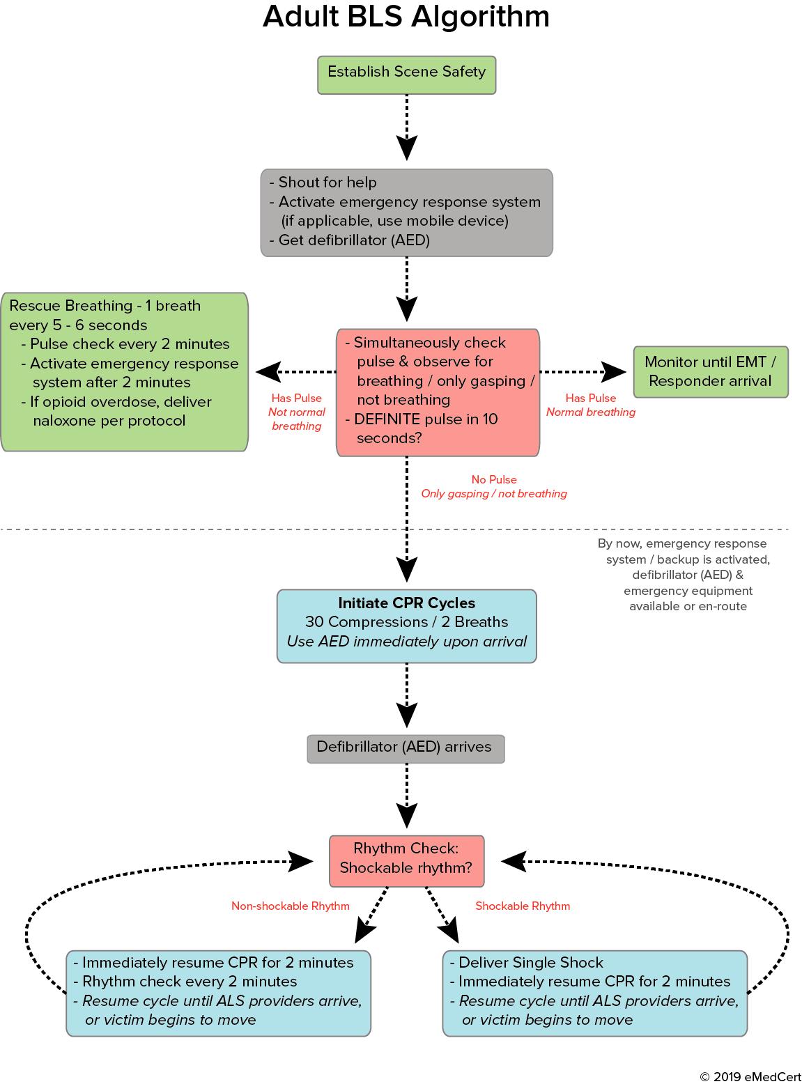 Adult BLS Algorithm